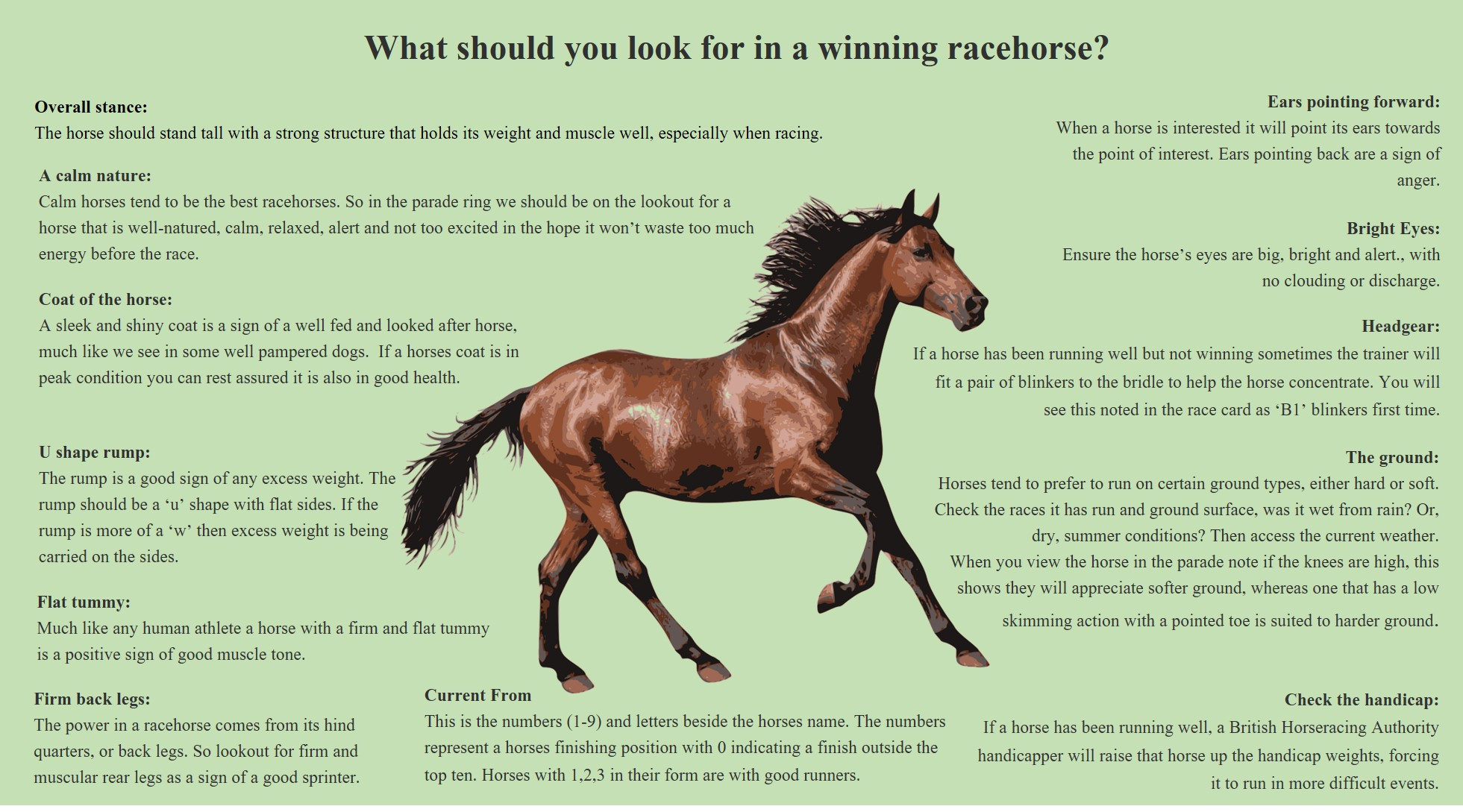 What to look for in a winning racehorse